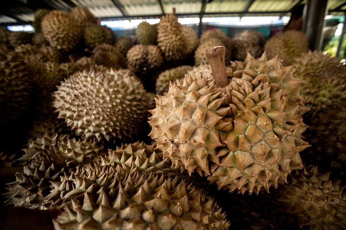 What are the King and Queen of Fruits? Thailand's Durian and Mangosteen.