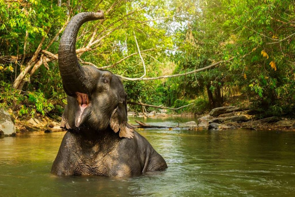 Elephant Sanctuaries Kata Rocks Phuket