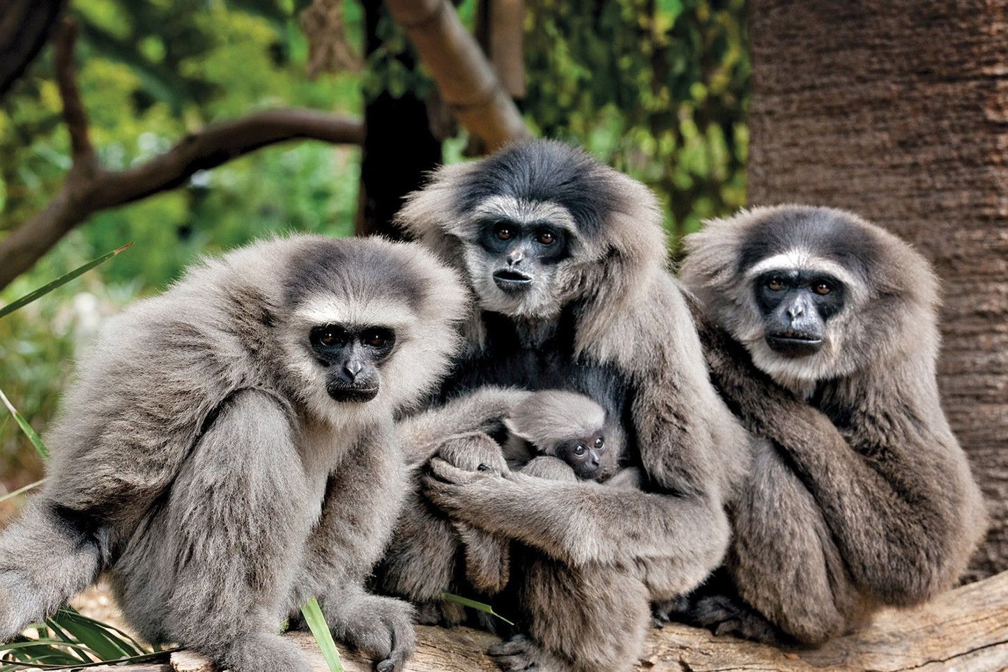 Best Ethical Rehabilitation Centres in Phuket - The Gibbon Rehabilitation Project
