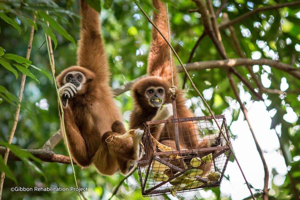 Best Ethical Rehabilitation Centres in Phuket - The Gibbon Rehabilitation Project