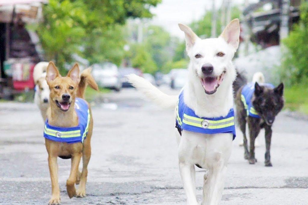 Best Ethical Rehabilitation Centres in Phuket - Soi Dog Foundation