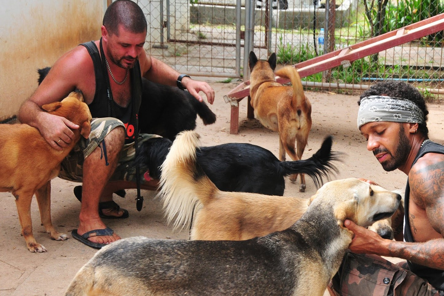 Best Ethical Rehabilitation Centres in Phuket - Soi Dog Foundation