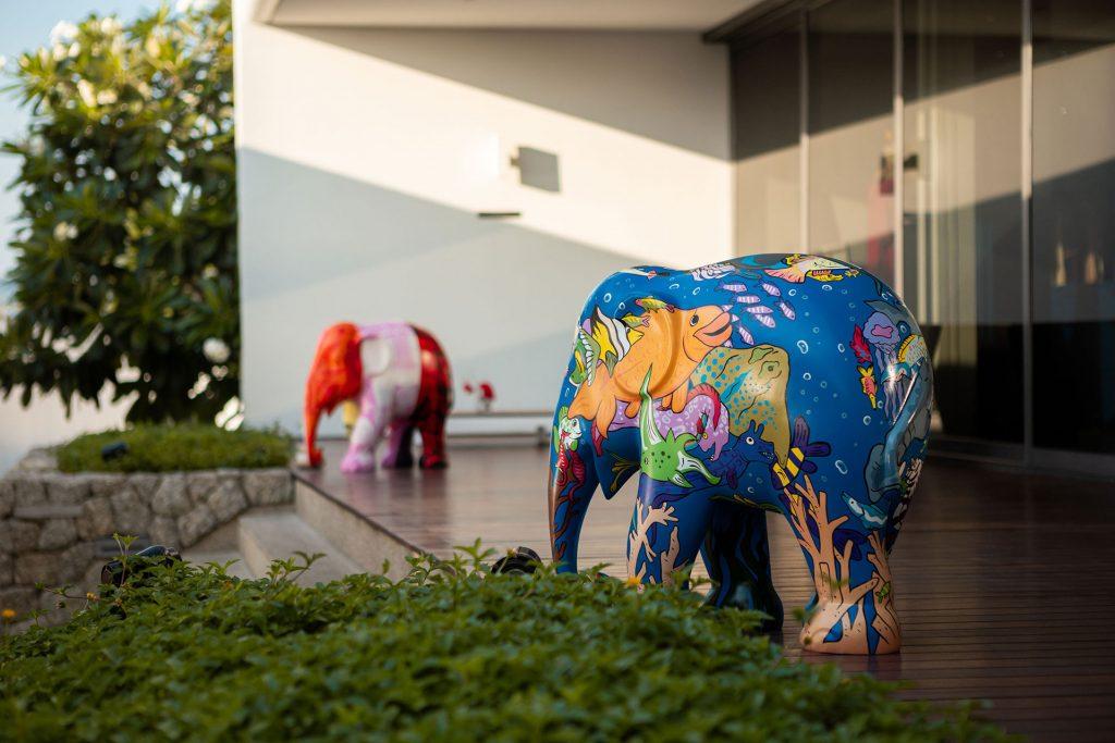 Kata Rocks Welcomes New Colourful Residents!
